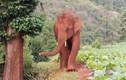 Video: Số phận con bị lạc khỏi đàn voi nổi tiếng nhất Trung Quốc