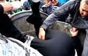 Dân Ukraine biểu tình, khiêng ông nghị vào... thùng rác