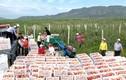 Bộ ảnh hiếm về nông dân Triều Tiên