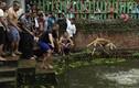 Những hình ảnh man rợ trong lễ hội giết dê ở Nepal