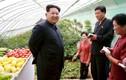 Ảnh một trang trại ở Triều Tiên của phóng viên Reuters
