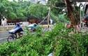 Ảnh: Sau Đài Loan, bão Megi tàn phá Trung Quốc