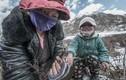 Nhọc nhằn việc săn lùng đông trùng hạ thảo ở Tây Tạng
