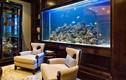Nguyên tắc vàng chọn nuôi cá cảnh để hút trọn tài lộc