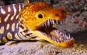 Những loài động vật đại dương đáng sợ không ai nghĩ chúng tồn tại