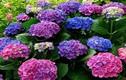 Cẩn thận với những loại hoa đẹp nhưng cực độc tại Việt Nam