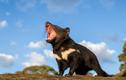 Tránh xa những loài vật đẹp nhưng bốc mùi... khó tẩy rửa