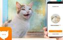"""Ứng dụng kỳ lạ giúp bạn giao tiếp với các """"boss"""" mèo"""