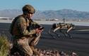 """Robot """"siêu khuyển"""" của quân đội Mỹ: Tuần tra theo lộ trình thiết lập"""