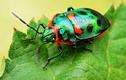 Ngỡ ngàng trước vẻ đẹp của những loài côn trùng quý hiếm nhất thế giới
