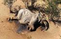 """Phát hiện thủ phạm """"thảm sát"""" hơn 300 con voi bên cạnh các hồ nước"""