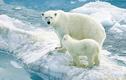 Những điểm để phân biện giữa Nam Cực và Bắc Cực ít người biết