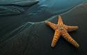 Nguyên nhân nào của Trái đất khiến Sao Biển có thể tuyệt chủng?