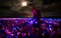 Bất ngờ khi thấy cánh đồng ở Hà Lan phát sáng trong đêm