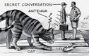 Khó tin lý do dự án biến mèo thành điệp viên của CIA thất bại