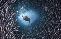 Loạt ảnh độc hiếm cuộc sống kỳ diệu dưới đáy đại dương khiến bạn ngỡ ngàng