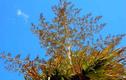 Cọ tự tử và những loài thực vật quý hiếm nhất hành tinh