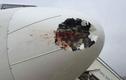 Nỗi kinh hoàng của phi công máy bay khi va chạm với chim trời
