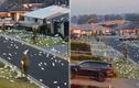 Kinh hãi cảnh hàng nghìn con vẹt trắng xâm chiếm thị trấn Australia