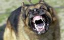 """Bản tính """"cắn con mồi đến chết"""" của chó dữ và cách cứu nạn nhân"""