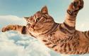 """Mèo có bản năng """"biết bay"""", rơi từ tầng 32 xuống cũng không chết"""