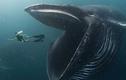 """Cú sốc của ngư dân sống sót sau khi bị cá voi khổng lồ """"nuốt nhầm"""""""