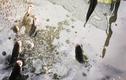 """Khám phá vùng đất có hiện tượng """"cá lóc bay"""" ở Việt Nam?"""