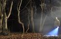 """Ánh sáng bí ẩn, cây mọc kỳ quái trong khu rừng """"Tam giác quỷ Bermuda"""""""