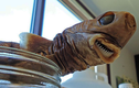 """Hàm răng kinh dị """"làm thịt"""" cả tàu ngầm của cá mập cắt bánh quy"""