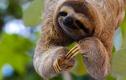 Loài động vật thờ ơ, lười biếng sống 64 triệu năm không tuyệt chủng