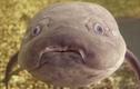 """Quái dị loài cá sống cả năm trên cạn, ngâm nước lâu là... """"tiêu đời"""""""