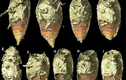 """Giải mã phân hóa thạch, sướng rơn phát hiện """"báu vật"""" vô giá"""