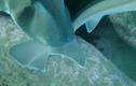 Video: Khoảnh khắc cá mập tán tỉnh nhau