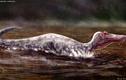 Cực nóng: Phát hiện quái vật ăn thịt chưa từng biết trên Trái đất