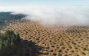 Bí ẩn giật mình vùng đất mọc lên hàng ngàn nấm mồ kỳ dị