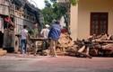 Bắt 30 tấn gỗ có nguy cơ tuyệt chủng