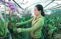 Trồng lan rừng bằng khí canh, trụ đứng: Ý tưởng làm giàu độc đáo