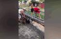Video: Kinh hoàng cảnh chó Pitbull lao vào cắn chết dê ở Nghệ An
