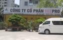 """Công ty Beepro bị tố """"bỏ rơi"""" 106 cây cổ thụ của Hà Nội: Trụ sở chỉ là thùng container"""