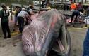 Phát hiện loài cá voi mới chỉ còn 100 cá thể