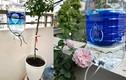 Về quê ăn Tết, nhiều người sáng tạo cách để cây được cung cấp đủ nước