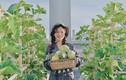 Khu vườn xanh ngát, cung cấp rau củ cho ngày dịch