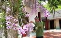 Lão nông xứ Tuyên 20 năm gây dựng vườn lan cổ tích
