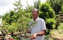 Làm giàu ở nông thôn: Với 7.000m2 trồng kiểng, lão nông có 2 tỷ/năm