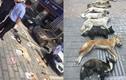 Trung Quốc: Chủ nhà hàng đi săn trộm chó hàng xóm về làm lẩu