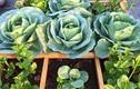 Tháng 10, trồng rau củ gì cả nhà ăn mãi không hết?