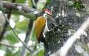 Vẻ đẹp của các loài động vật tại vườn quốc gia Cát Tiên