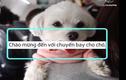 Video: Ngộ nghĩnh chuyến bay dành cho cún cưng ở Nhật Bản