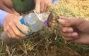 Video: Xem người Hà Tĩnh đào dế cơm đem về chế biến món ăn