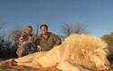 Nam Phi: Nuôi sư tử cho dân chơi lắm tiền bắn chết, thu 400 triệu/lần